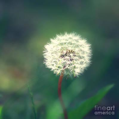 Phantasie Photograph - Pusteblumen Art by Tanja Riedel