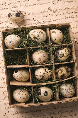 Quail Eggs In Box Print by Garry Gay