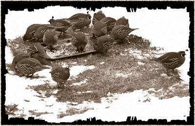 Quail Having Lunch Print by Will Borden