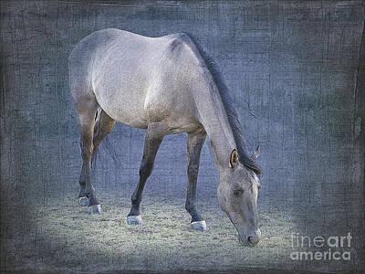 Quarter Horse Digital Art - Quarter Horse In Blue by Betty LaRue