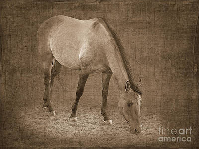 Quarter Horse Digital Art - Quarter Horse In Sepia by Betty LaRue