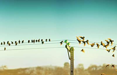 Of Birds Photograph - Que No Cunda El Pánico by by MedioTuerto