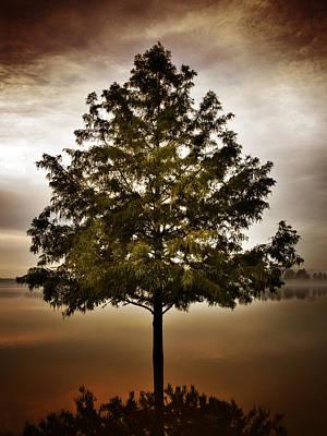 Creve Coeur Park Photograph - Quiet Tree by Patrick Pope