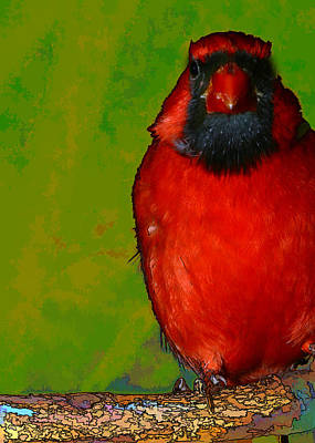 Digital Photograph - Quirky Cardinal by Gregory Scott