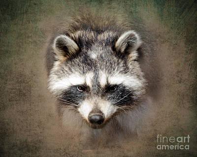 Raccoon Photograph - Raccoon 2 by Betty LaRue