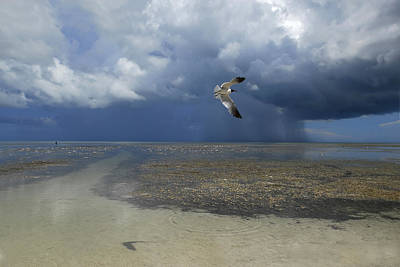 Flying Seagull Photograph - Rain Falls From A Huge Cloud by Raul Touzon