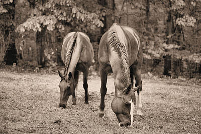 Rainy Day Photograph - Rain In Horse Country by JC Findley