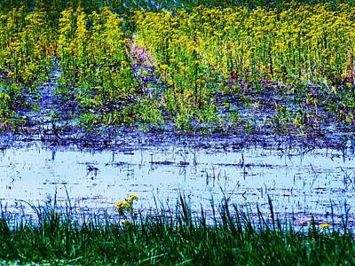 Rainbow Field Print by Todd Sherlock