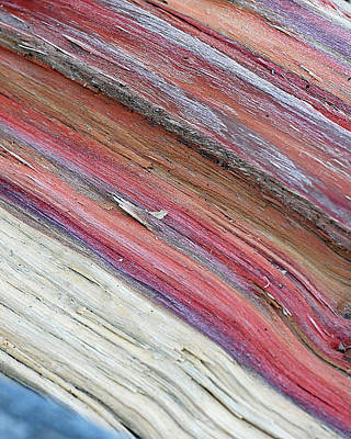 Purples Photograph - Rainbow Wood by Lisa Phillips