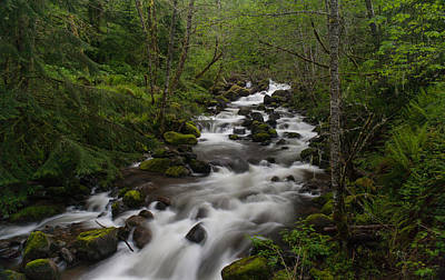 Rainier Forest Flow Print by Mike Reid
