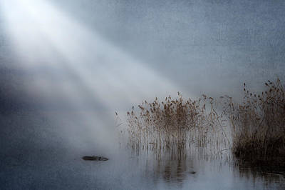 Reeds Photograph - Rays Of Light by Joana Kruse