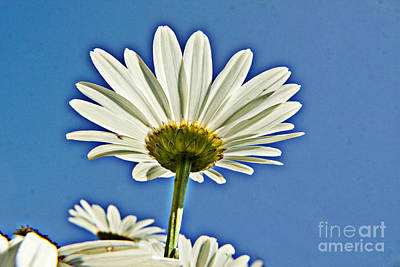 Reach For The Blue Sky Print by Darleen Stry