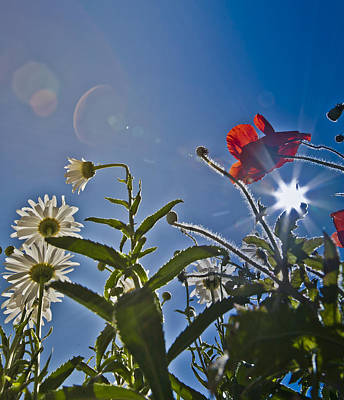Reaching For The Sky Print by Dennis Hofelich