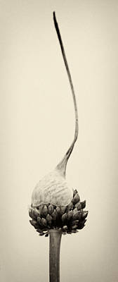 Reaching For The Sky Print by Stelios Kleanthous
