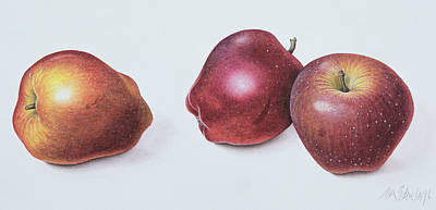 Food And Beverage Drawing - Red Apples by Margaret Ann Eden