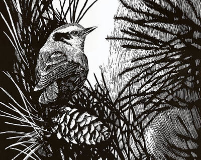 Scratchboard Painting - Red Breasted Nuthatch by Lorraine Marian Kenny