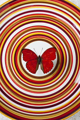 Unusual Animal Photograph - Red Butterfly On Plate With Many Circles by Garry Gay