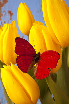Red Butterful On Yellow Tulips Print by Garry Gay