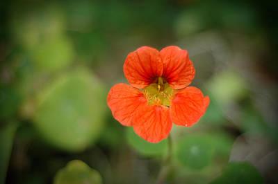 Flower Photograph - Red Flower In The Garden by Noah Katz