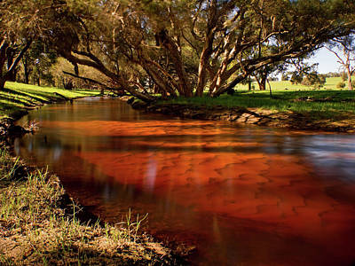 Australia Digital Art - Red Gully by Heather Thorning