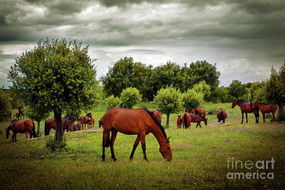 Red Horses Print by Carlos Caetano