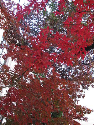 Red Leaves Of Windsor Print by Shawn Hughes