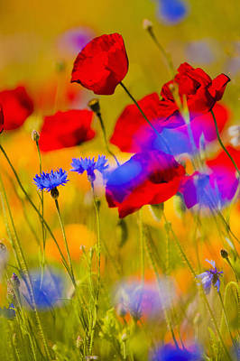 Close Focus Nature Scene Photograph - Red Poppies And Wildflowers In A Field, Soft Focus by Bob Pool