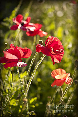 Poppy Photograph - Red Poppies by Elena Elisseeva