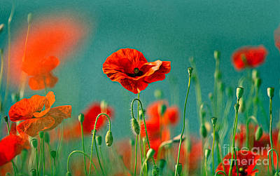 Artistic Styled Photograph - Red Poppy Flowers 06 by Nailia Schwarz