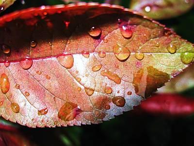 Red Rain Print by Todd Sherlock