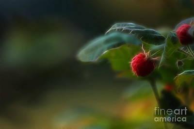 Raspberry Digital Art - Red Raspberry by Marjorie Imbeau