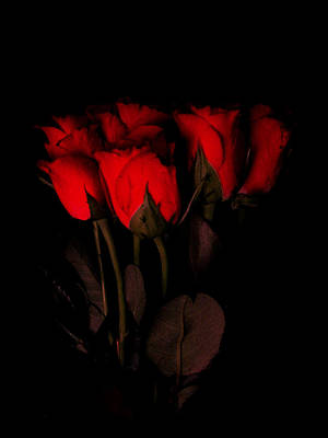 Red Roses 1 Original by Jessica Velasco
