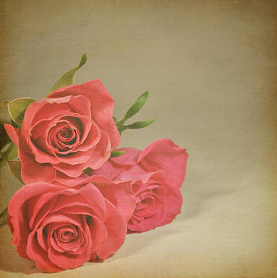 Petals Photograph - Red Roses by Photo - Lyn Randle