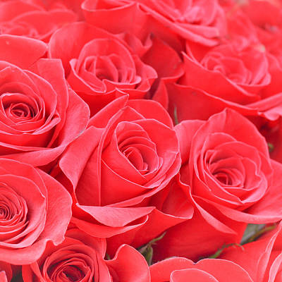 A Lot Photograph - Red Roses by Tom Gowanlock
