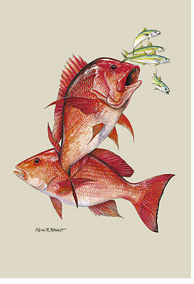 Red Snapper Print by Kevin Brant