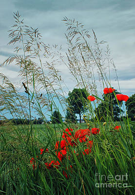 Wayside Photograph - Red Spots In The Wind by Jutta Maria Pusl