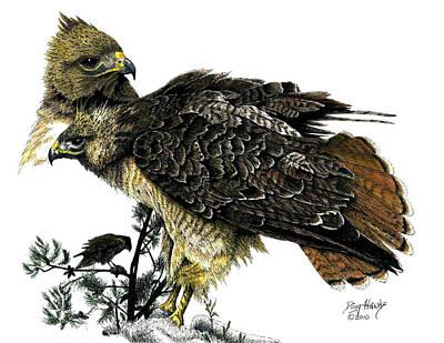 Red Tail Hawks Mixed Media - Red Tail Hawk by Douglas Hawks