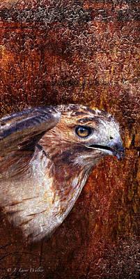 Red Tail Hawk Digital Art - Red-tailed Hawk by J Larry Walker