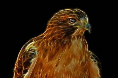 Hawk Digital Art - Red-tailed Hawk by Sandy Keeton