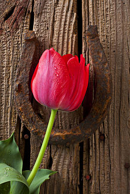 Good Luck Photograph - Red Tulip And Horseshoe  by Garry Gay