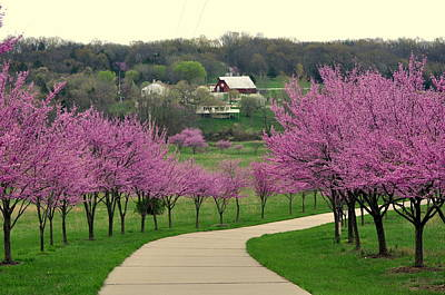Redbud Print by Marty Koch