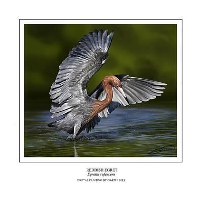 Egret Digital Art - Reddish Egret 1 by Owen Bell