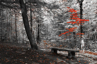 Park Benches Photograph - Reds In The Woods by Aimelle