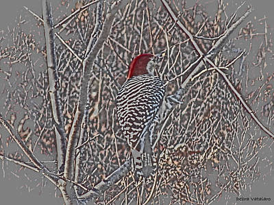 Woodpecker Mixed Media - Redtop Woodpecker  by Debra     Vatalaro