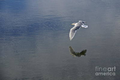 Washington Photograph - Reflected Flight by Sean Griffin