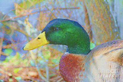 Waterfowl Mixed Media - Relaxing By The Pond by Deborah Benoit