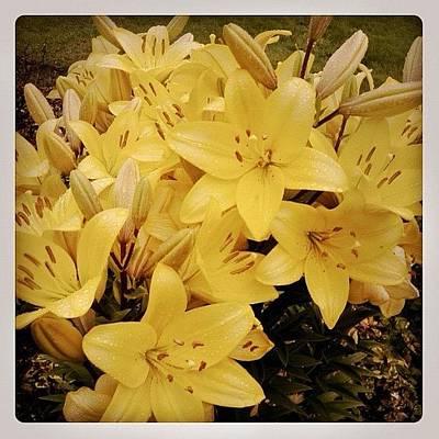 Lilies Photograph - Retro Lilies by Inna Jasons