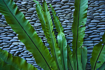 Rich Green Fern Leaves Against A Wall Print by Jason Edwards