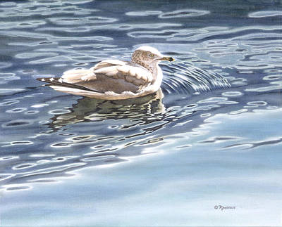 Blue Painting - Ringed Bill Gull by Richard De Wolfe