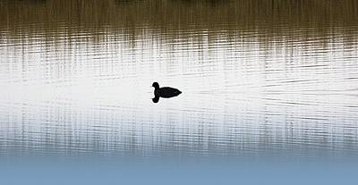 Moorhen Photograph - Ripples by Sharon Lisa Clarke